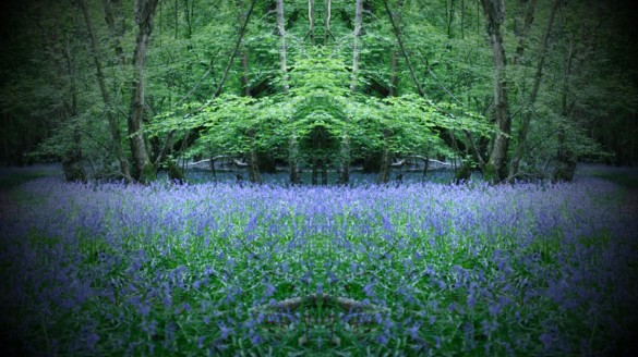 PowerPoint pictures - bluebell 16x9 centred